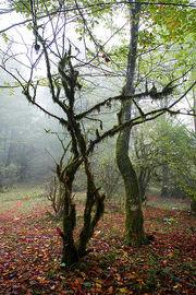 Fall Leaves Under Dancing Tree