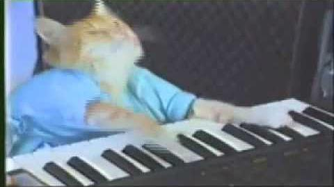 Keyboard Cat 10 hours