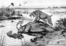 240px-Smilodon and Canis dirus