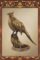 Pheasant Carving