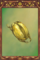 Gold Beetle Carapace