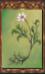 Nameless Flower (Origins)