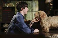 Bates Motel - Ein Junge und sein Hund 18