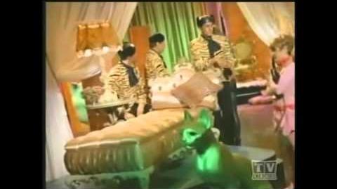 Batman Pussycat - California Nights