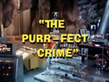 The Purr-Fect Crime