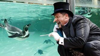 Penguin screaming