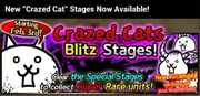 Crazed cat en