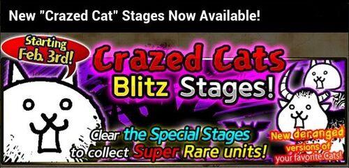 Crazed cat en