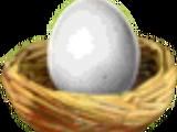 Pet Eggs