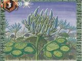 The Fruit of Emerald Agrimony