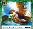 Ohayashi Bird