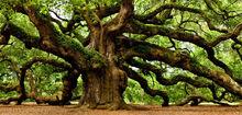 Irish-tree-society-feature