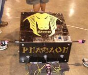 BB Pharaoh