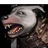 Dog 01 04 armor 02 70x70