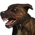Dog 01 03