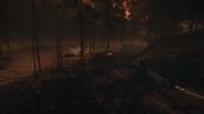 Night Woods 27