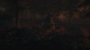 Night Woods 03
