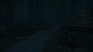 Night Woods 11