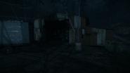 Night Woods 05