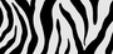 BFHL Zebra Camo
