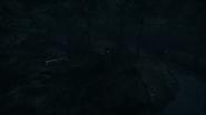 Night Woods 19