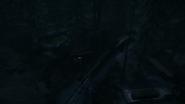 Night Woods 14
