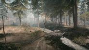 Backwoods 21