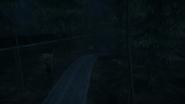 Night Woods 21