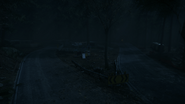 Night Woods 17