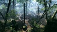 Argonne Forest 09