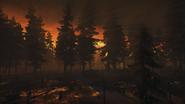 Night Woods 24