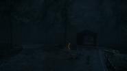 Night Woods 18
