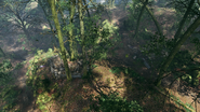 Argonne Forest Frontlines Creek 01
