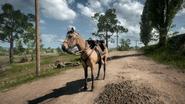 BF1 Horse Dun
