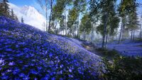 BF5 Halvoy Blue Forest