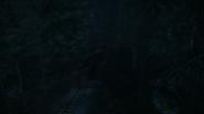 Night Woods 13