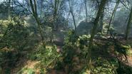Argonne Forest 19