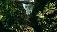 Argonne Forest 15