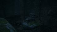 Night Woods 12