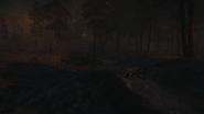 Night Woods 26