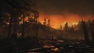 Night Woods 02