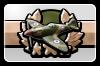 BFH Plane Mastery I