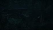 Night Woods 09
