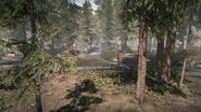 Backwoods 02