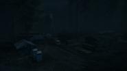 Night Woods 06