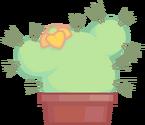 P&B Cactus Asset1 NEW