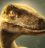 Velociraptor TeamIcon