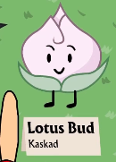 LOTUSBUD