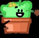 Cactus Pose Amer1