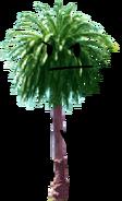 Palmtree Pose